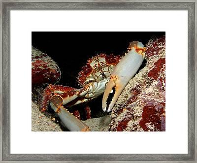 Crab Pose Framed Print by Nina Banks