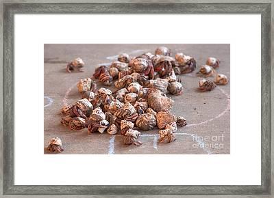 Crab Race Framed Print