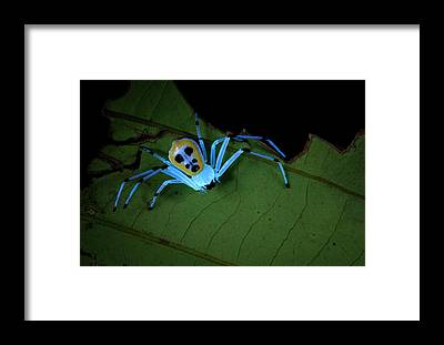 Designs Similar to Crab Spider Under Uv Light