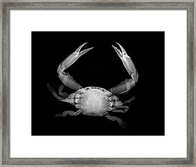 Crab Framed Print by William A Conklin