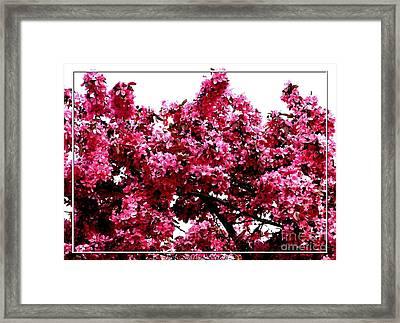 Crabapple Tree Blossoms Framed Print by Rose Santuci-Sofranko
