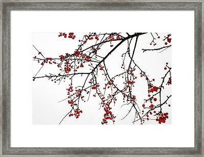 Crabapples I Framed Print