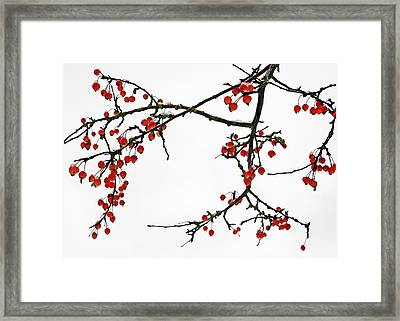 Crabapples II Framed Print
