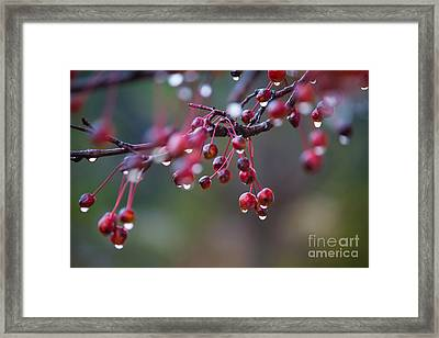 Crabapples In The Mist Framed Print