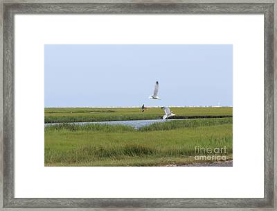 Framed Print featuring the photograph Crabber by David Jackson