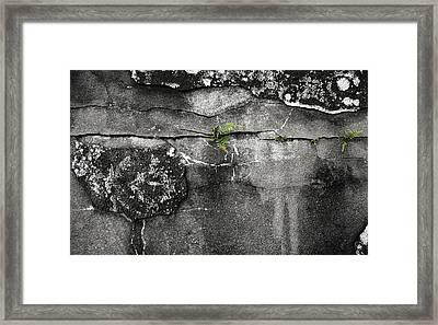Crack Of Life Framed Print by Stellina Giannitsi