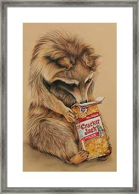 Cracker Jack Bandit Framed Print by Jean Cormier