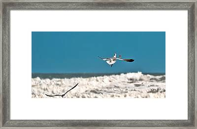 Framed Print featuring the photograph Cracker Tracker by DigiArt Diaries by Vicky B Fuller