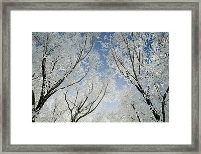 Crackling Cold Framed Print by Steve Smith