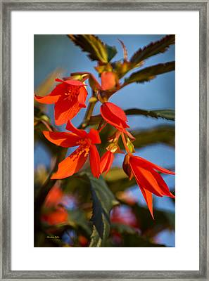 Crackling Fire Begonia Framed Print by Christina Rollo