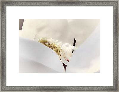 Framed Print featuring the photograph Cradled by Janie Johnson