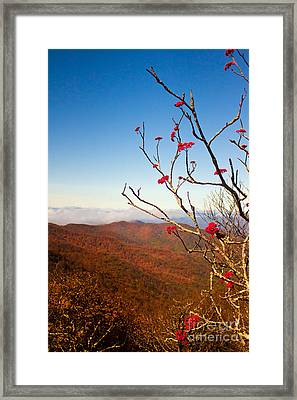 Craggy Gardens Framed Print by Lena Auxier