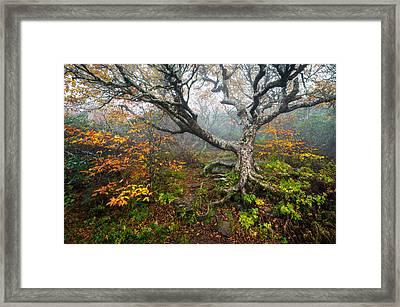 Craggy Gardens North Carolina Blue Ridge Parkway Autumn Nc Framed Print
