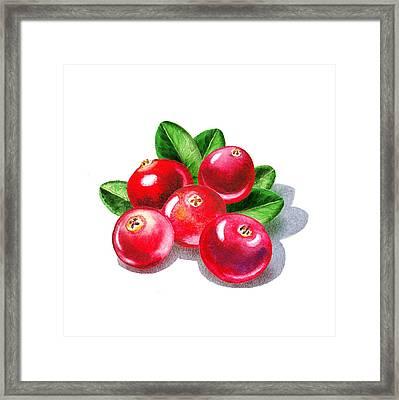 Cranberries Framed Print