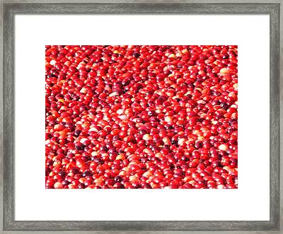 Framed Print featuring the photograph Cranberries by Jodi Terracina