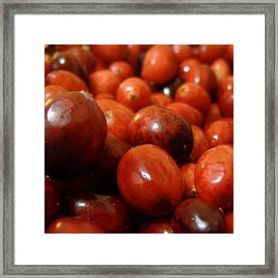 Cranberries Framed Print by Joseph Skompski