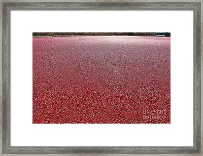 Cranberries Framed Print