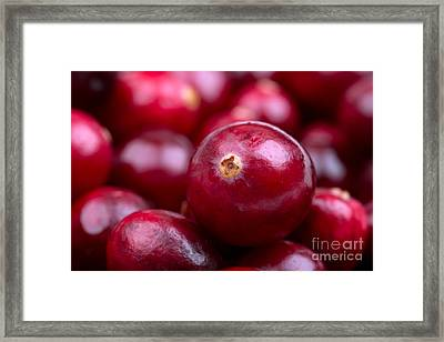 Cranberry Closeup Framed Print by Jane Rix