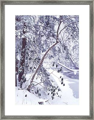 Cranberry River Deep Snow Framed Print by Thomas R Fletcher
