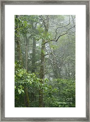 Cranberry Wilderness Mist Framed Print by Thomas R Fletcher