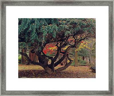 Cranbury Monkey Puzzle Framed Print