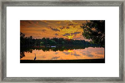 Crane @ Sunrise Framed Print