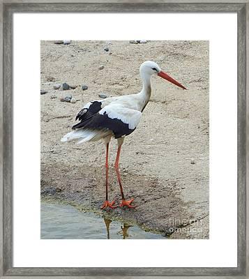 Crane 1 Framed Print