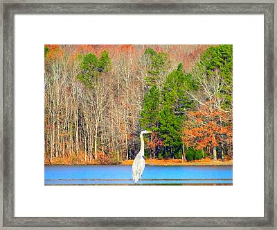 Crane And Color Framed Print by Cindy Croal