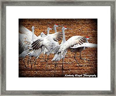 Crane Ballet  Framed Print