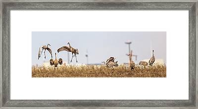 Crane Dance Framed Print
