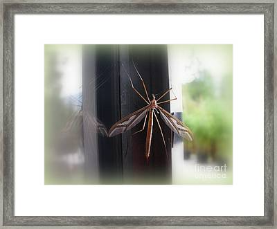 Crane Fly Framed Print by Leone Lund