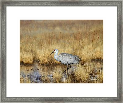 Framed Print featuring the photograph  Solitary Crane In The Field by Ruth Jolly