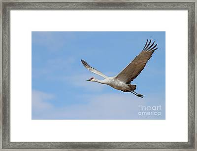 Framed Print featuring the photograph Crane In The Skies by Ruth Jolly