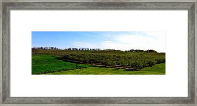 Crane Orchards Framed Print by Michelle Calkins