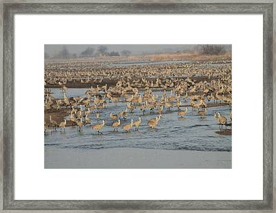 Crane River Framed Print