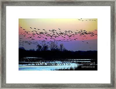 Crane Watch 2013 Framed Print