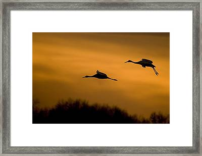 Cranes At Sunset Framed Print