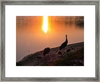 Cranes At Sunset Framed Print by Zina Stromberg