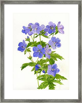 Cranes Bill Wild Geraniums Framed Print by Sharon Freeman