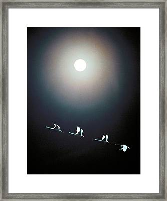 Cranes Flying Across The Moon Framed Print by Panoramic Images