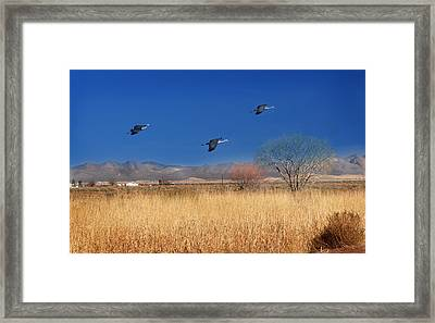 Framed Print featuring the photograph Cranes In Flight by Barbara Manis