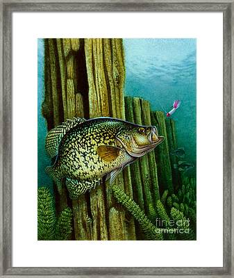 Crappie And Posts Framed Print by Jon Q Wright