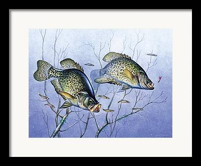 Crappie Framed Prints