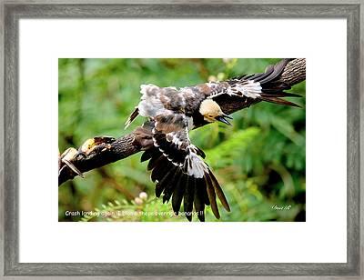 Crash Landing Framed Print by Donald Rumsey