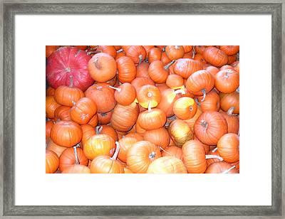 Crate Of Pumpkins Framed Print