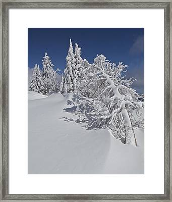 Framed Print featuring the photograph Crater Lake Trees 2 by Todd Kreuter