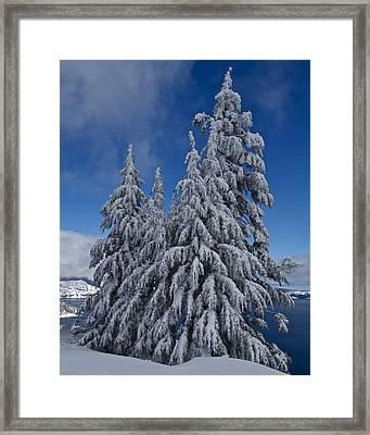 Crater Lake Trees  Framed Print