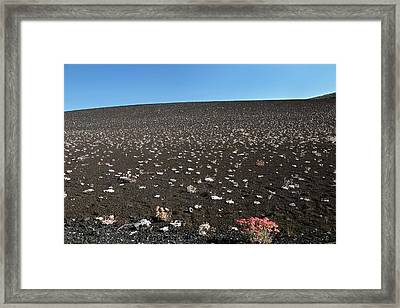 Craters Of The Moons Plants Framed Print by Jim West