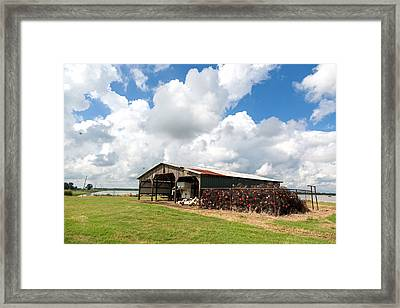 Crawfish Farm With Nets Framed Print