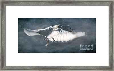 Crawl Stroke Framed Print by Jim Wright